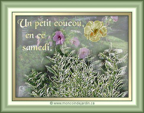 bon samedi Cartesamedi2_