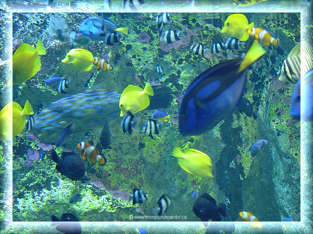 photos 1024x768 aquarium - photo #11
