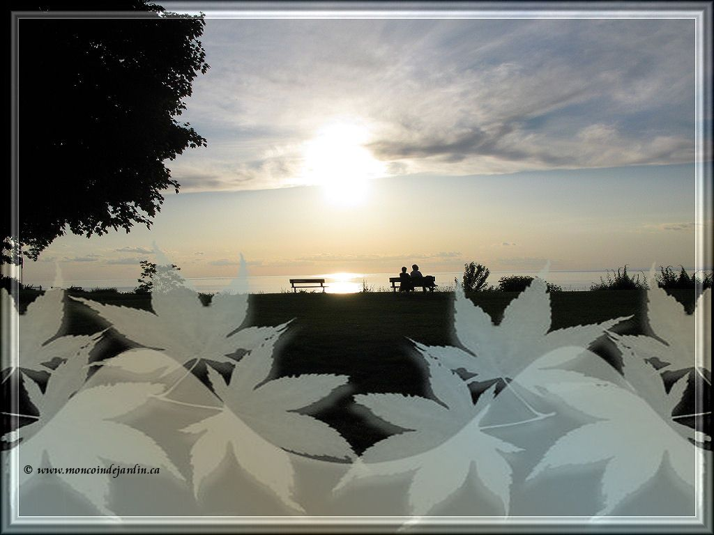 Fond d 39 cran coucher de soleil for Carte virtuelle mon coin de jardin