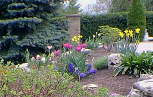 tulipes mon coin de jardin. Black Bedroom Furniture Sets. Home Design Ideas